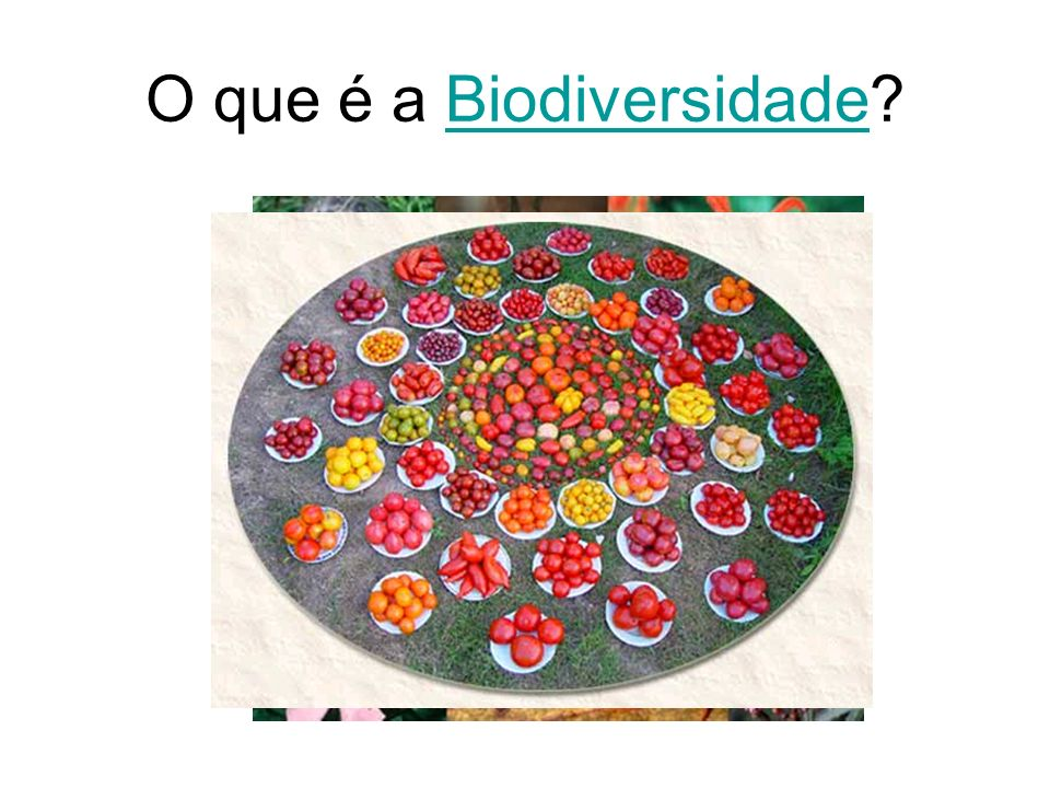 O que é a Biodiversidade?Biodiversidade