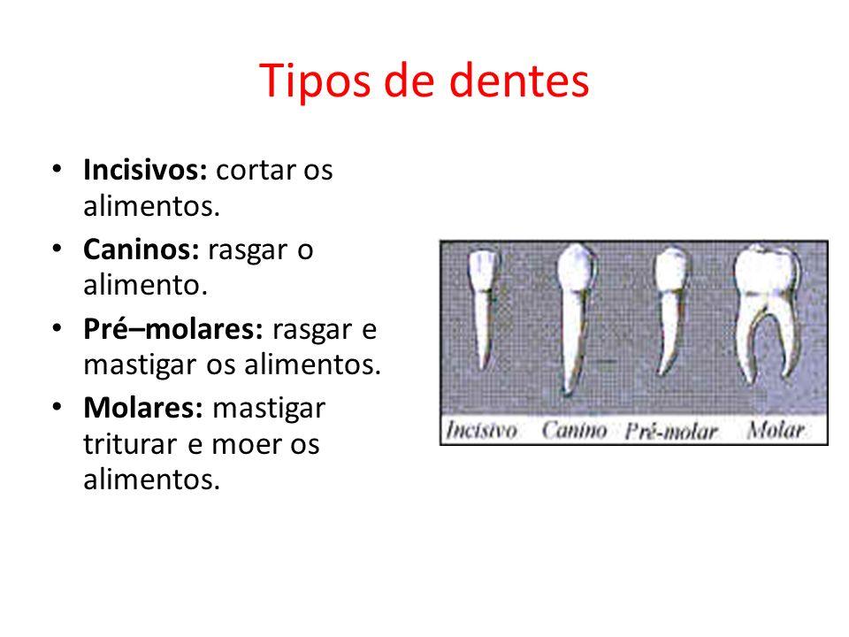 Tipos de dentes Incisivos: cortar os alimentos. Caninos: rasgar o alimento. Pré–molares: rasgar e mastigar os alimentos. Molares: mastigar triturar e