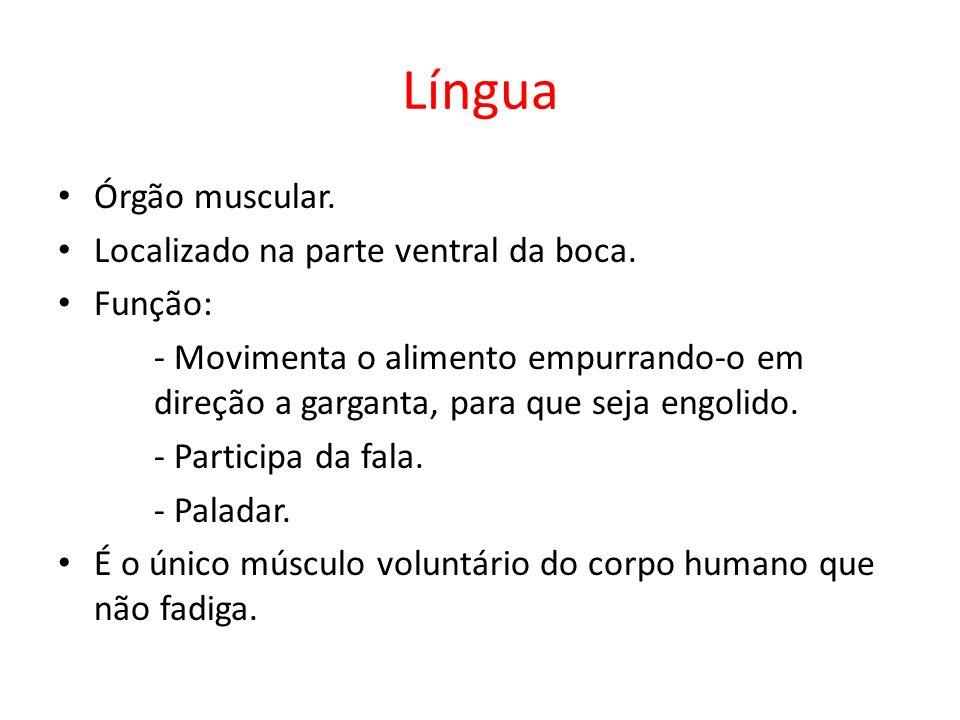 Língua Órgão muscular.Localizado na parte ventral da boca.