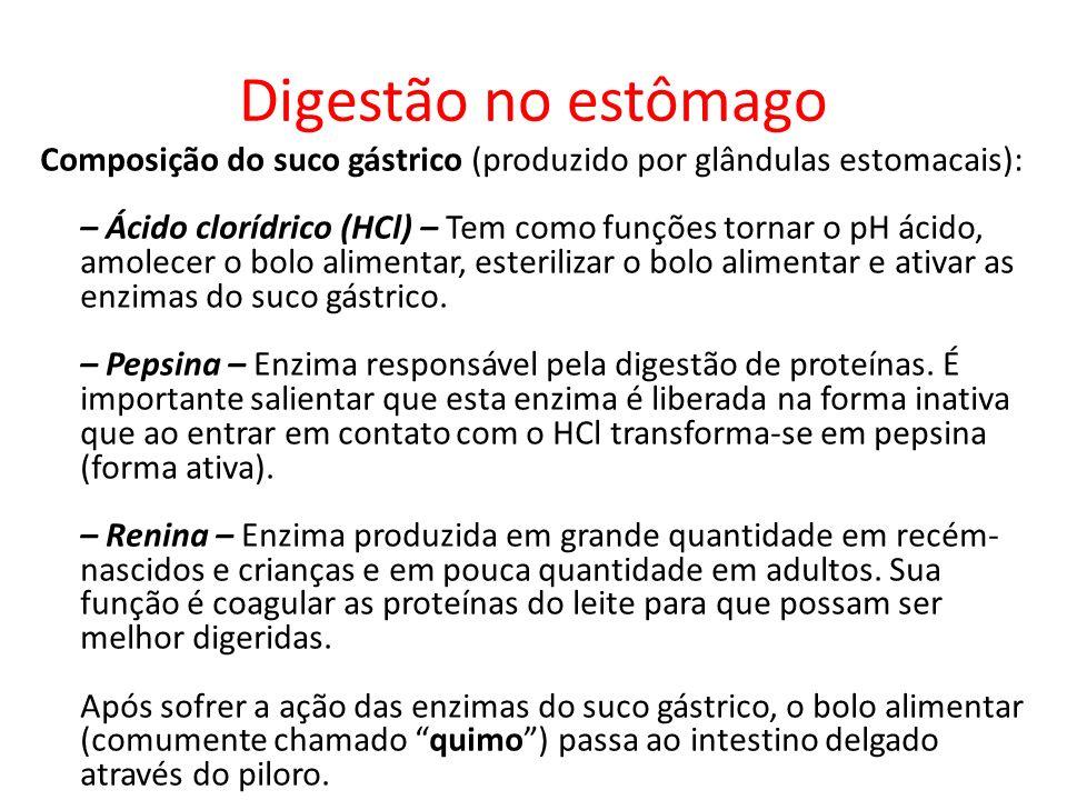 Digestão no estômago Composição do suco gástrico (produzido por glândulas estomacais): – Ácido clorídrico (HCl) – Tem como funções tornar o pH ácido, amolecer o bolo alimentar, esterilizar o bolo alimentar e ativar as enzimas do suco gástrico.