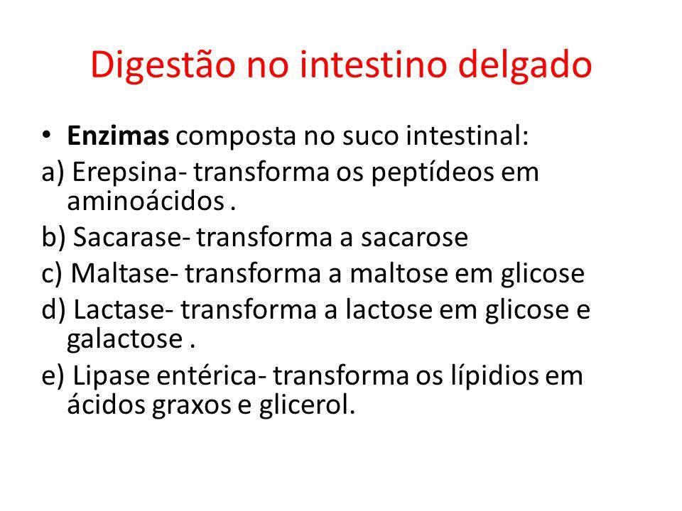Digestão no intestino delgado Enzimas composta no suco intestinal: a) Erepsina- transforma os peptídeos em aminoácidos. b) Sacarase- transforma a saca