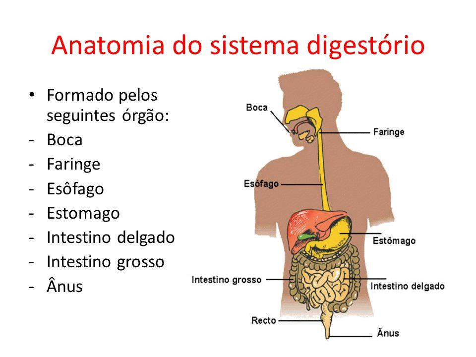 Anatomia do sistema digestório Formado pelos seguintes órgão: -Boca -Faringe -Esôfago -Estomago -Intestino delgado -Intestino grosso -Ânus
