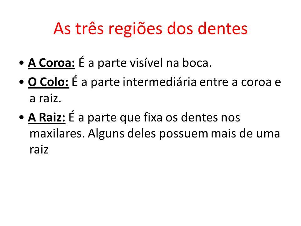 As três regiões dos dentes A Coroa: É a parte visível na boca. O Colo: É a parte intermediária entre a coroa e a raiz. A Raiz: É a parte que fixa os d