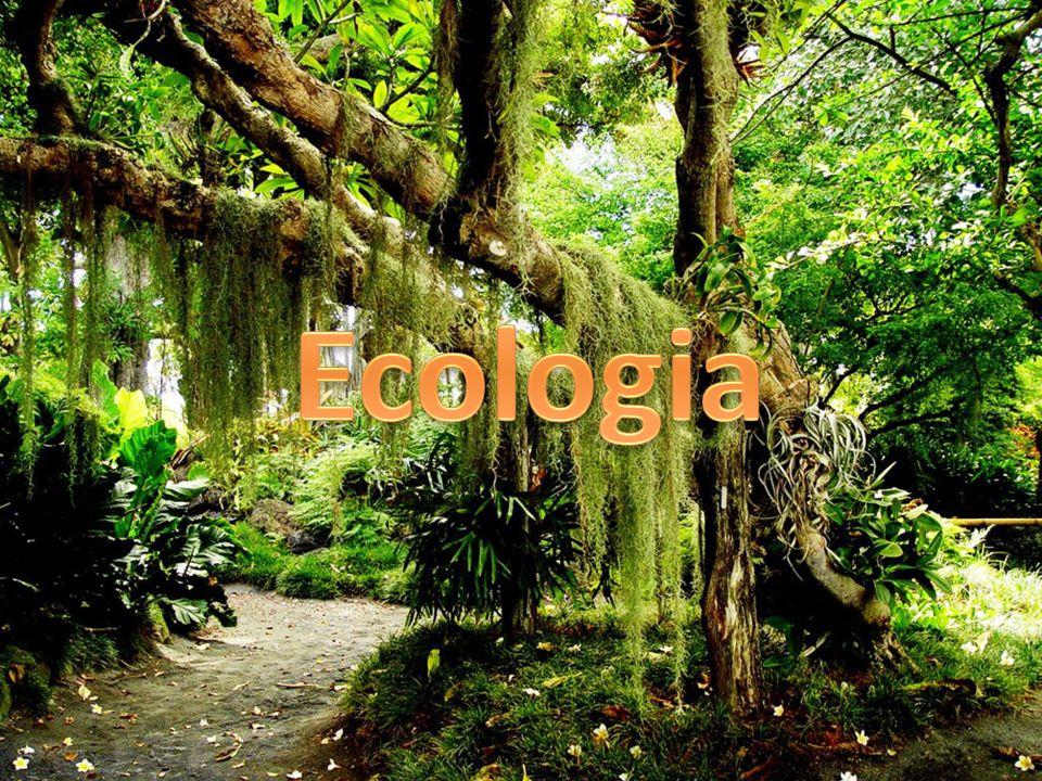 Ecossistema – unidade em que há relação estável entre fatores bióticos e abióticos.