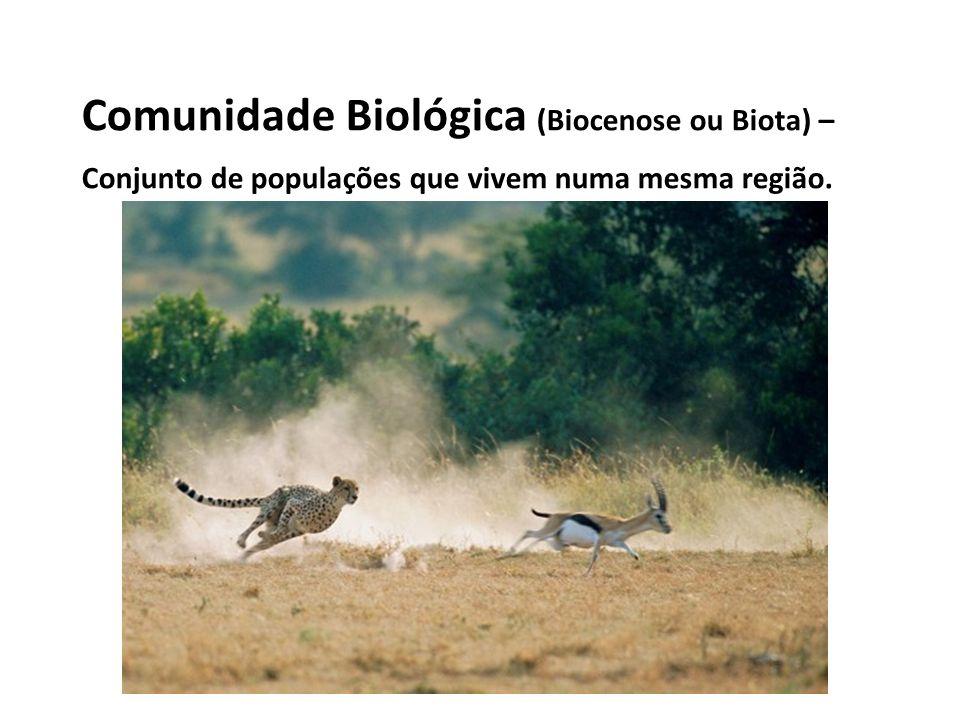 Comunidade Biológica (Biocenose ou Biota) – Conjunto de populações que vivem numa mesma região.