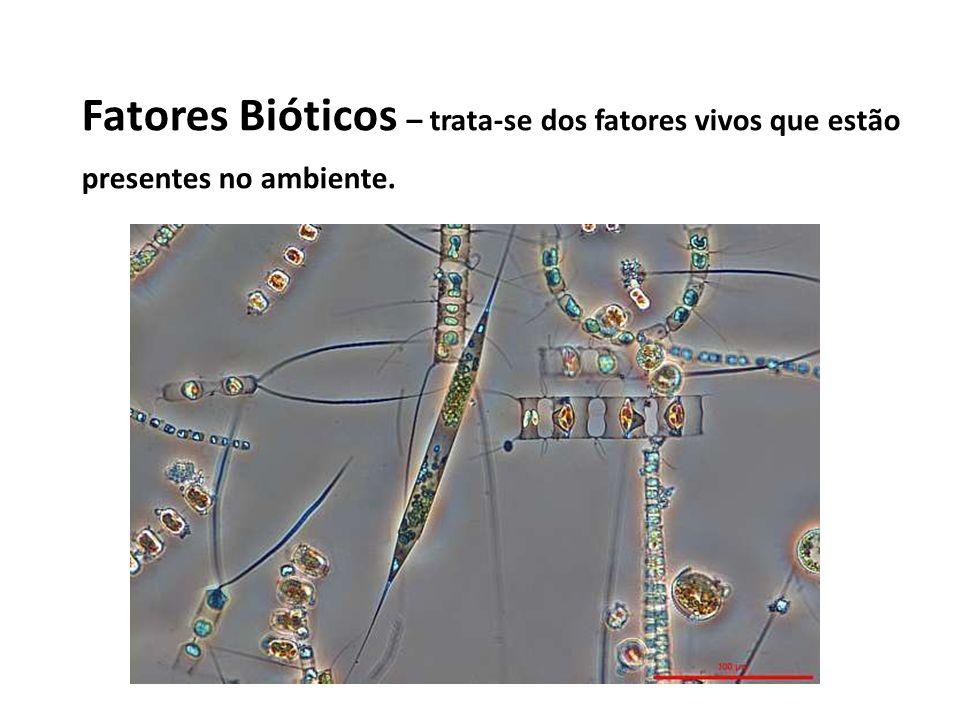 Biótopo (ou ecótopo) – lugar com condições que permitem a sobrevivência de organismos.