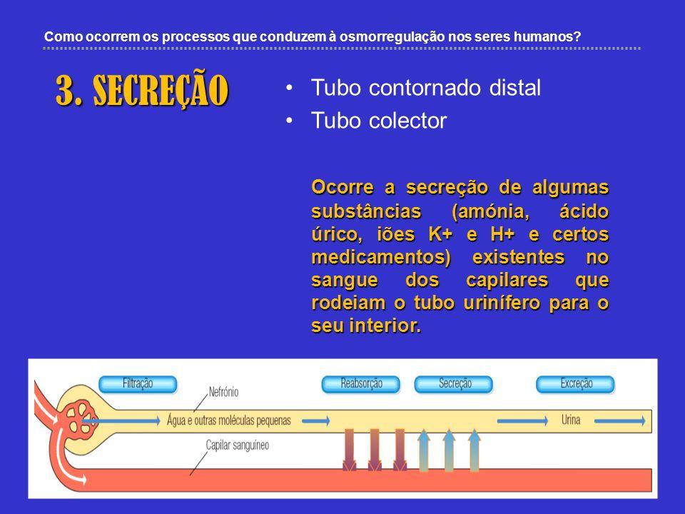 Como ocorrem os processos que conduzem à osmorregulação nos seres humanos? 3. SECREÇÃO Tubo contornado distal Tubo colector Ocorre a secreção de algum