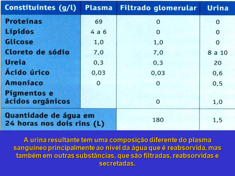 A urina resultante tem uma composição diferente do plasma sanguíneo principalmente ao nível da água que é reabsorvida, mas também em outras substância