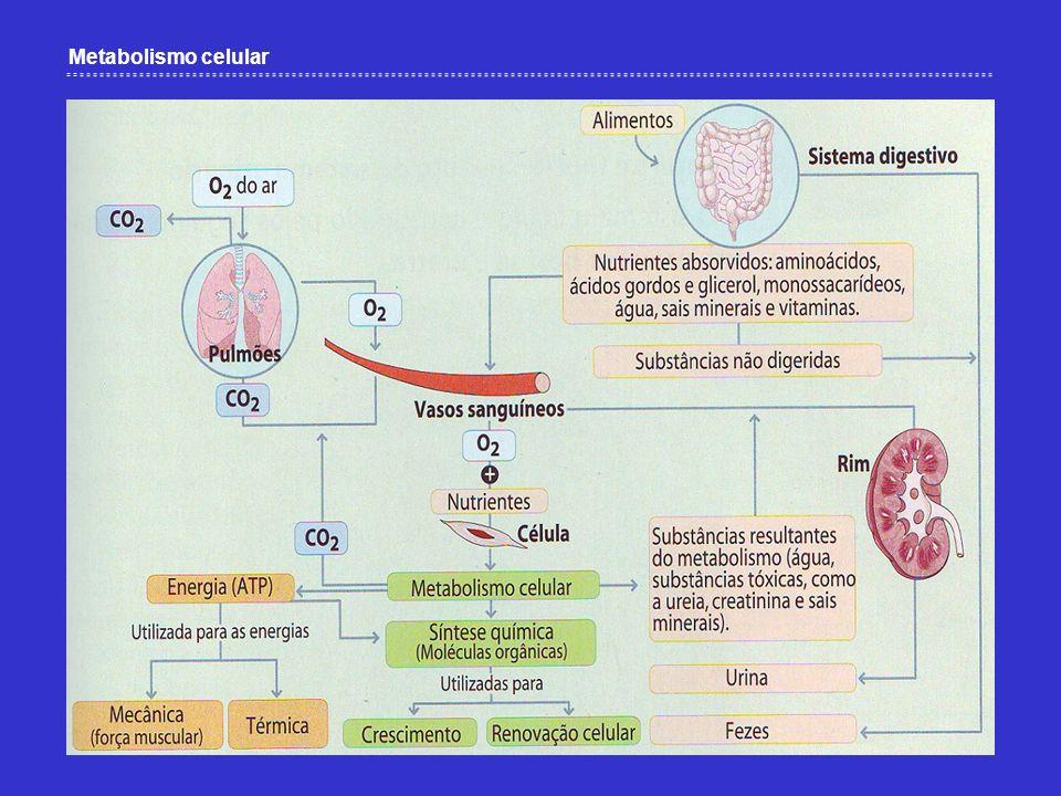 Como ocorrem os processos que conduzem à osmorregulação.