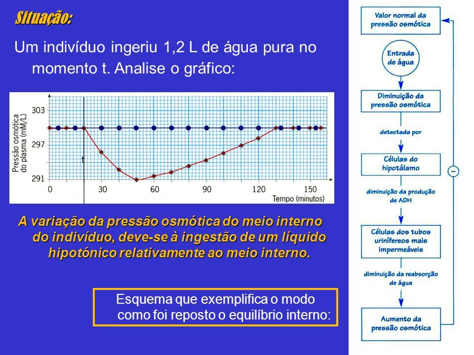Situação: Um indivíduo ingeriu 1,2 L de água pura no momento t. Analise o gráfico: A variação da pressão osmótica do meio interno do indivíduo, deve-s