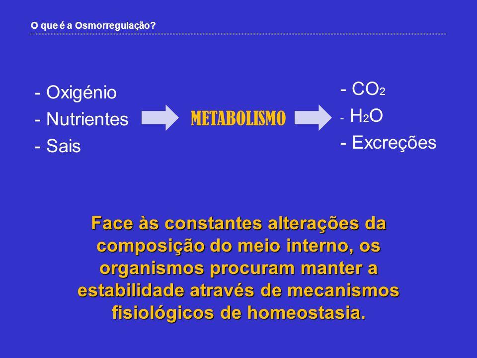O que é a Osmorregulação? METABOLISMO - Oxigénio - Nutrientes - Sais - CO 2 - H 2 O - Excreções Face às constantes alterações da composição do meio in