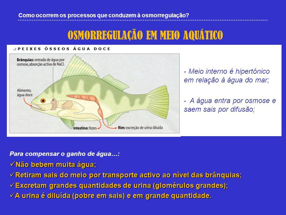 Como ocorrem os processos que conduzem à osmorregulação? OSMORREGULAÇÃO EM MEIO AQUÁTICO - Meio interno é hipertónico em relação à água do mar; - A ág