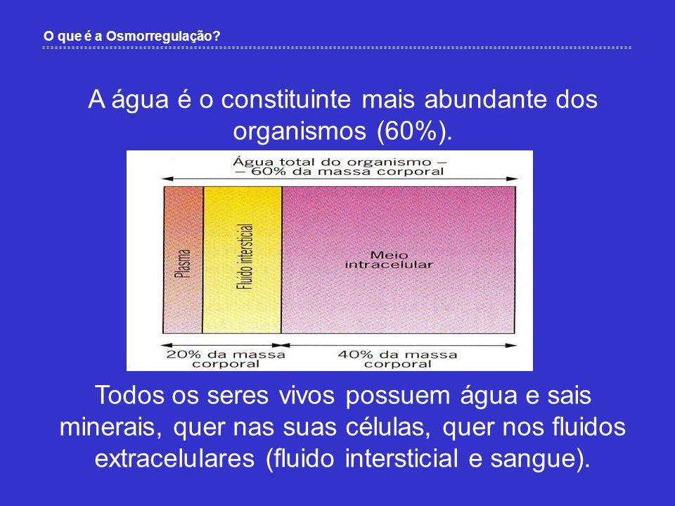 Como ocorrem os processos que conduzem à osmorregulação nos seres humanos.