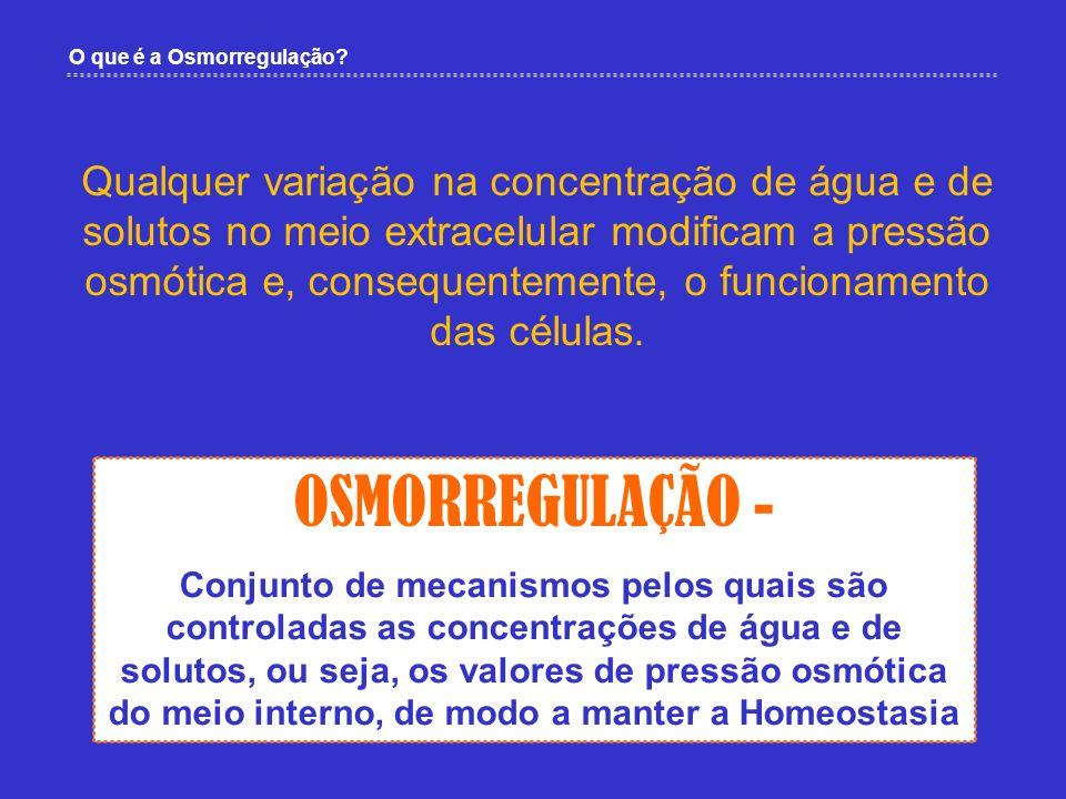 OSMORREGULAÇÃO - Conjunto de mecanismos pelos quais são controladas as concentrações de água e de solutos, ou seja, os valores de pressão osmótica do