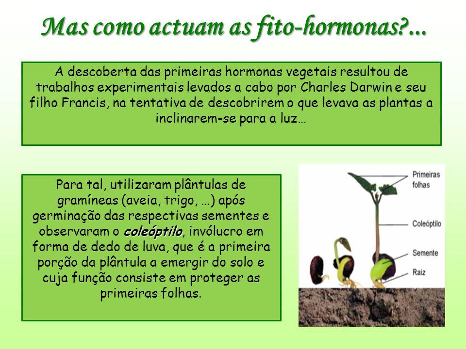 Mas como actuam as fito-hormonas?...