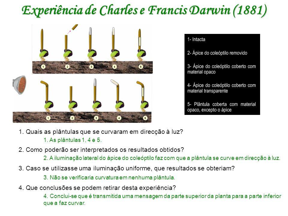 Experiência de Charles e Francis Darwin (1881) 1.