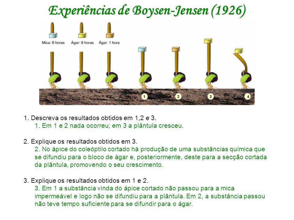 Experiências de Boysen-Jensen (1926) 1.Descreva os resultados obtidos em 1,2 e 3.