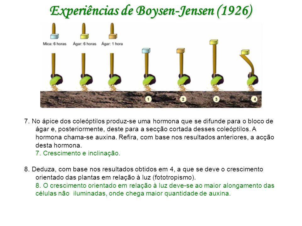 Experiências de Boysen-Jensen (1926) 7.