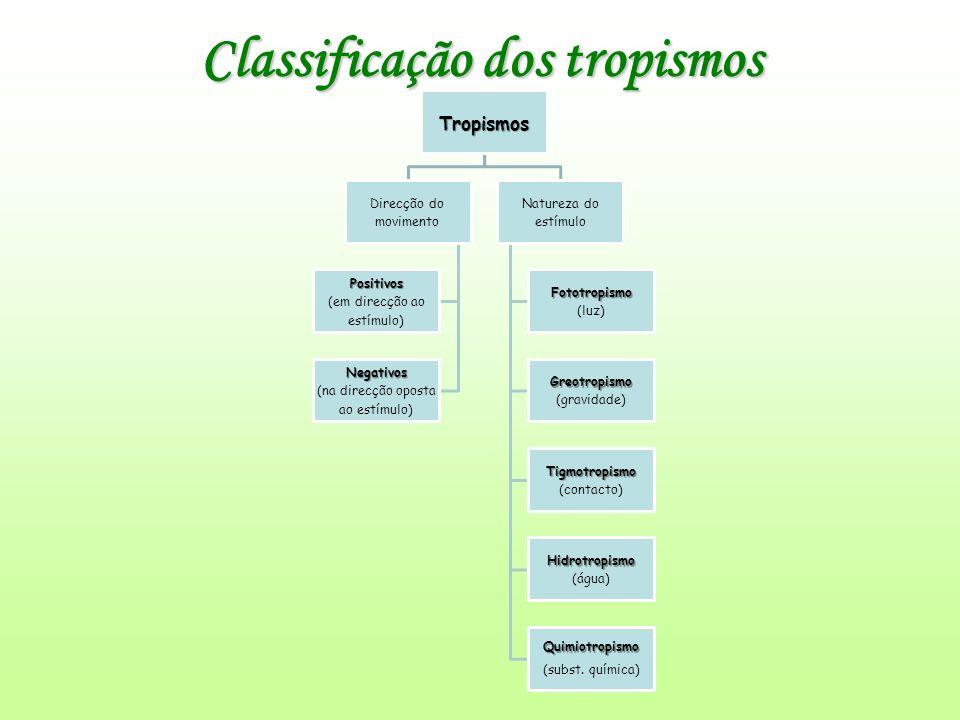 Classificação dos tropismos Tropismos Direcção do movimento Positivos (em direcção ao estímulo) Negativos (na direcção oposta ao estímulo) Natureza do estímulo Fototropismo (luz) Greotropismo (gravidade) Tigmotropismo (contacto) Hidrotropismo (água) Quimiotropismo (subst.