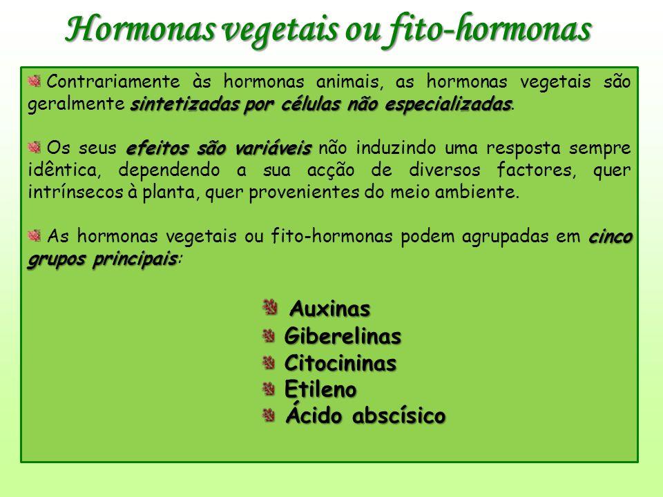 Hormonas vegetais ou fito-hormonas sintetizadas por células não especializadas Contrariamente às hormonas animais, as hormonas vegetais são geralmente sintetizadas por células não especializadas.