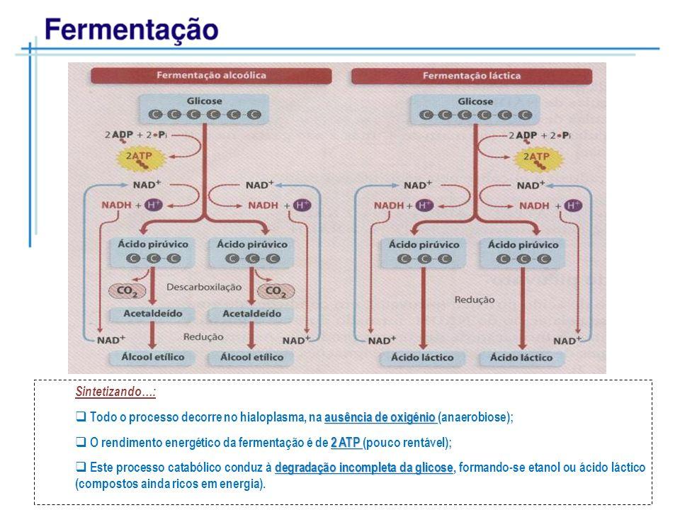 Sintetizando…: ausência de oxigénio Todo o processo decorre no hialoplasma, na ausência de oxigénio (anaerobiose); 2 ATP O rendimento energético da fe