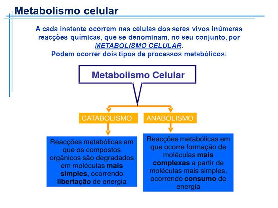 Metabolismo celular A cada instante ocorrem nas células dos seres vivos inúmeras reacções químicas, que se denominam, no seu conjunto, por METABOLISMO