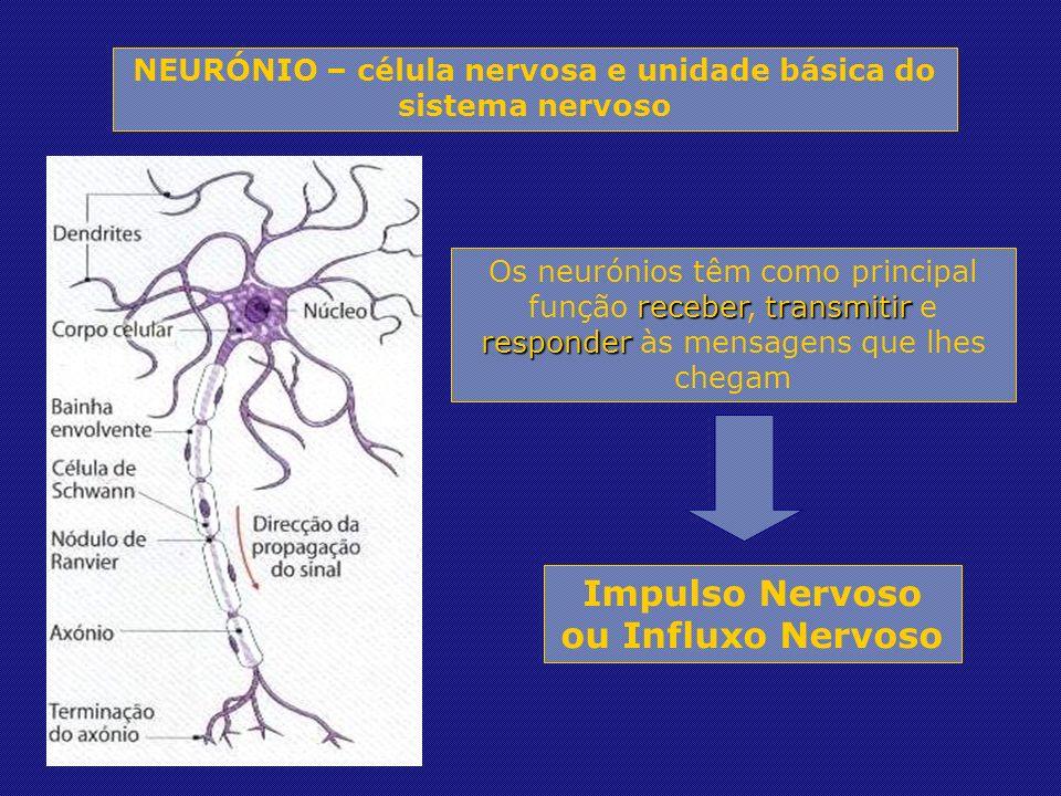 NEURÓNIO – célula nervosa e unidade básica do sistema nervoso Os neurónios têm como principal função r rr receber, t tt transmitir e responder às mensagens que lhes chegam Impulso Nervoso ou Influxo Nervoso