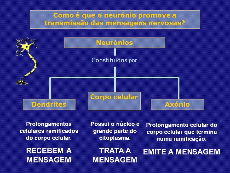 Neurónios Constituídos por Corpo celular Dendrites Axónio Prolongamentos celulares ramificados do corpo celular.