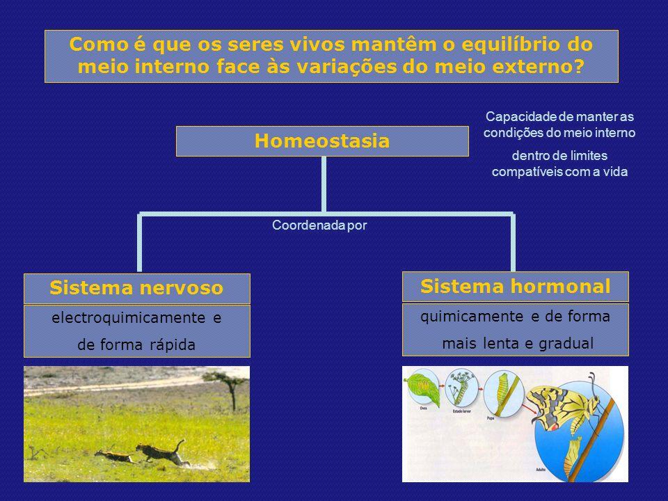 Como é que os seres vivos mantêm o equilíbrio do meio interno face às variações do meio externo.