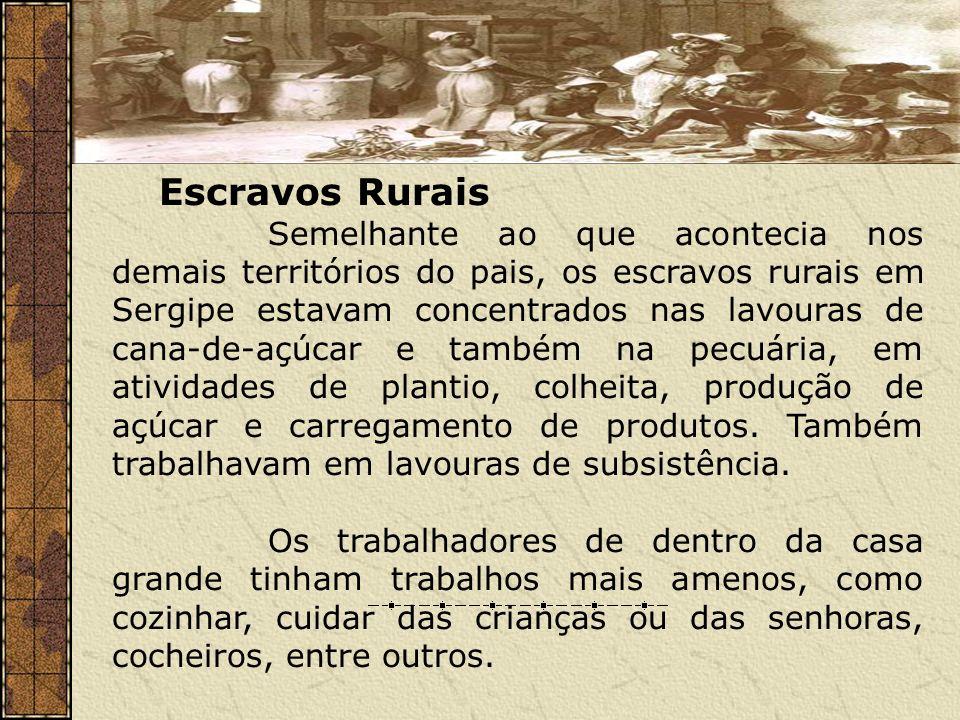 Escravos Rurais Semelhante ao que acontecia nos demais territórios do pais, os escravos rurais em Sergipe estavam concentrados nas lavouras de cana-de