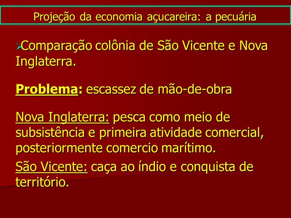 Projeção da economia açucareira: a pecuária Comparação colônia de São Vicente e Nova Inglaterra. Comparação colônia de São Vicente e Nova Inglaterra.