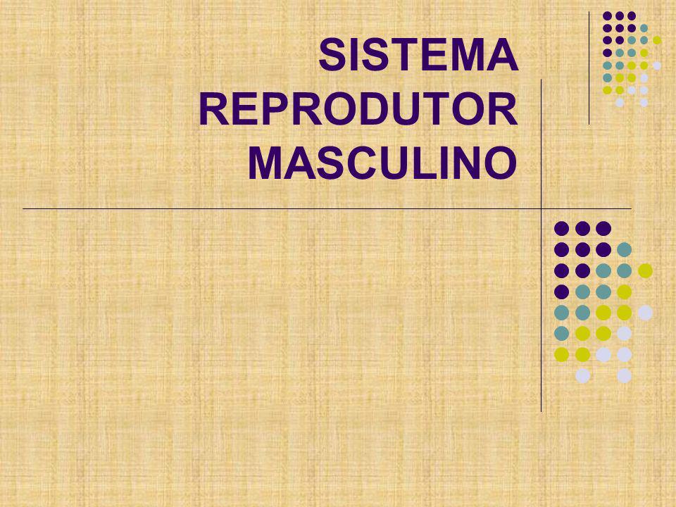 Sistema Reprodutor/Sistema Genital Gônadas Vias reprodutoras Glândulas anexas