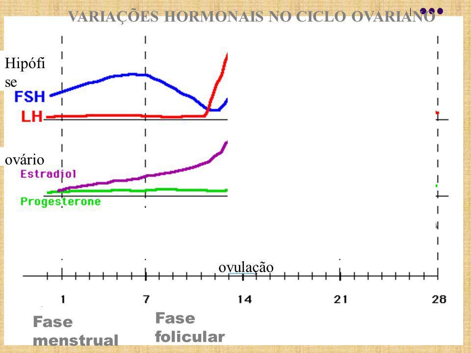 Fase folicular VARIAÇÕES HORMONAIS NO CICLO OVARIANO Hipófi se ovário Fase menstrual ovulação