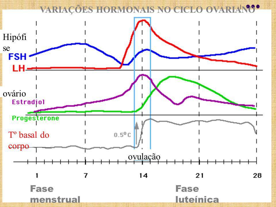 Fase luteínica VARIAÇÕES HORMONAIS NO CICLO OVARIANO Hipófi se ovário Ovulação Fase menstrual