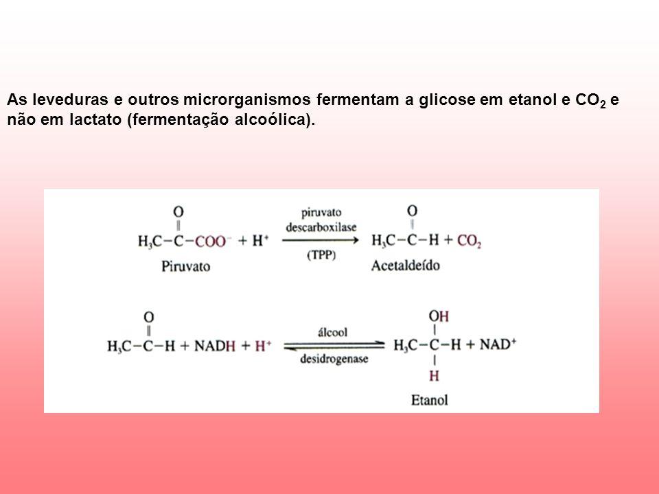 As leveduras e outros microrganismos fermentam a glicose em etanol e CO 2 e não em lactato (fermentação alcoólica).