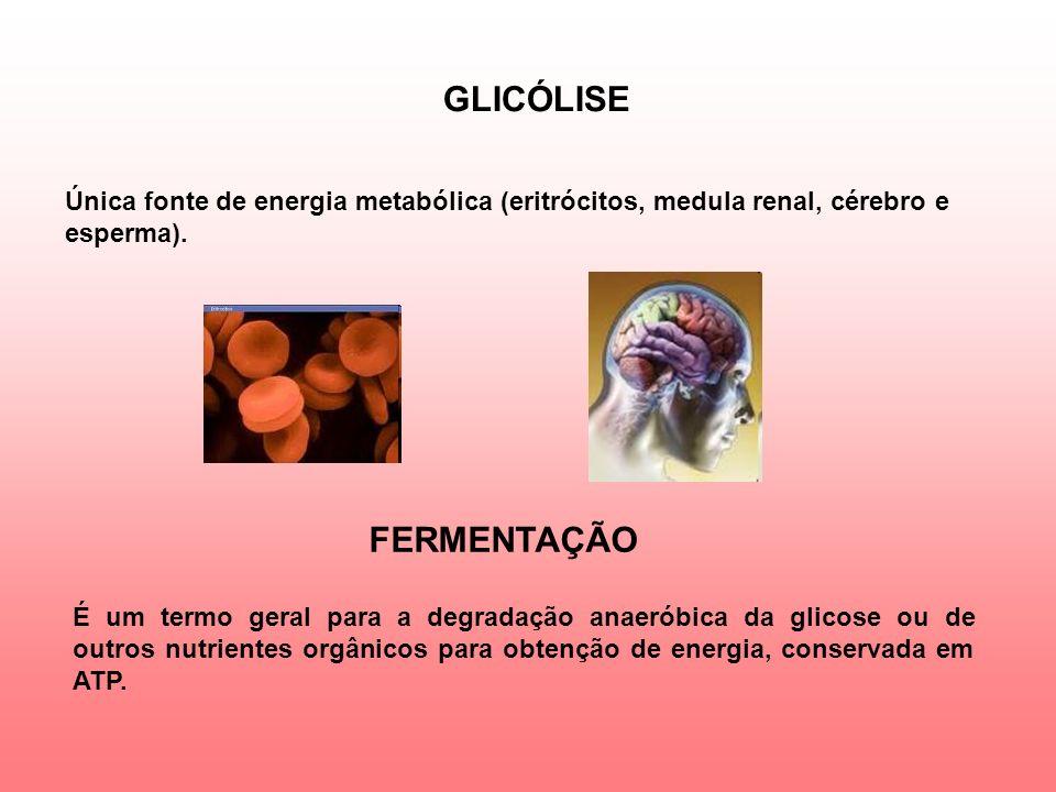 GLICÓLISE Única fonte de energia metabólica (eritrócitos, medula renal, cérebro e esperma).