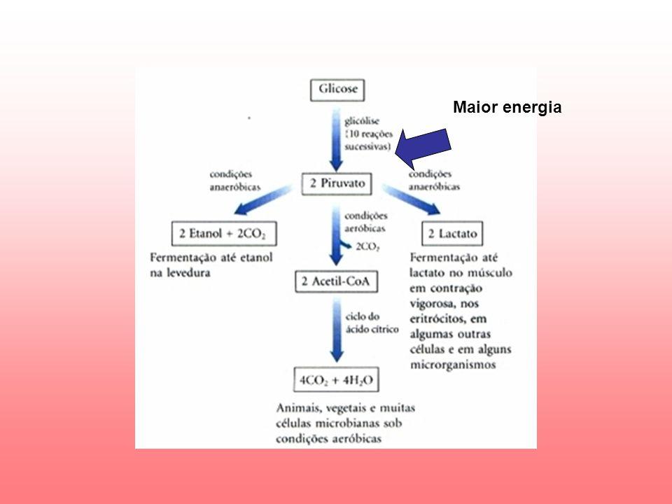 A oxidação das coenzimas reduzidas e, posteriormente, usada para síntese de ATP.