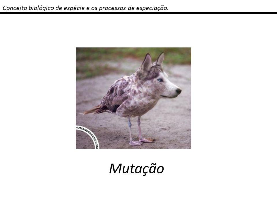 Conceito biológico de espécie e os processos de especiação. Mutação