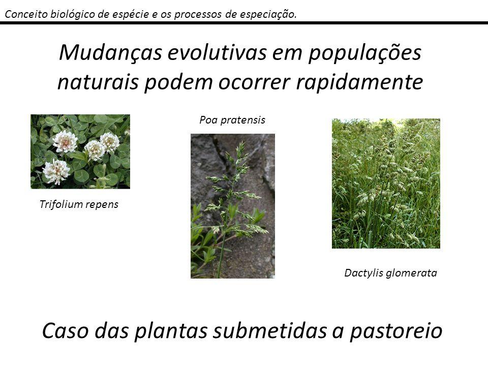 Conceito biológico de espécie e os processos de especiação. Mudanças evolutivas em populações naturais podem ocorrer rapidamente Trifolium repens Poa