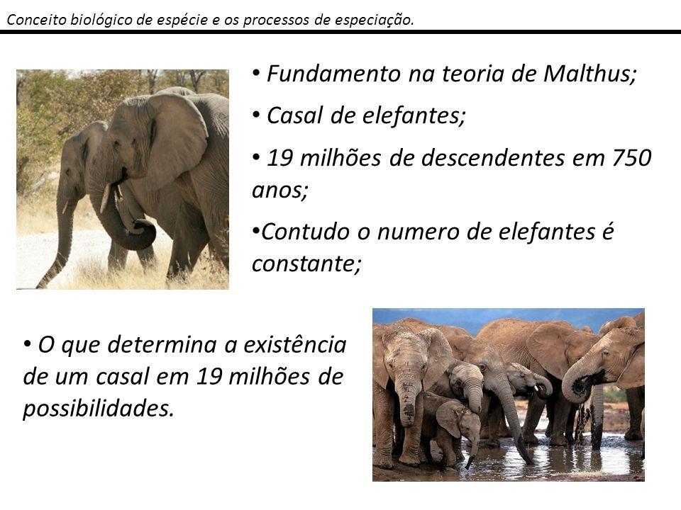 Conceito biológico de espécie e os processos de especiação. Fundamento na teoria de Malthus; Casal de elefantes; 19 milhões de descendentes em 750 ano