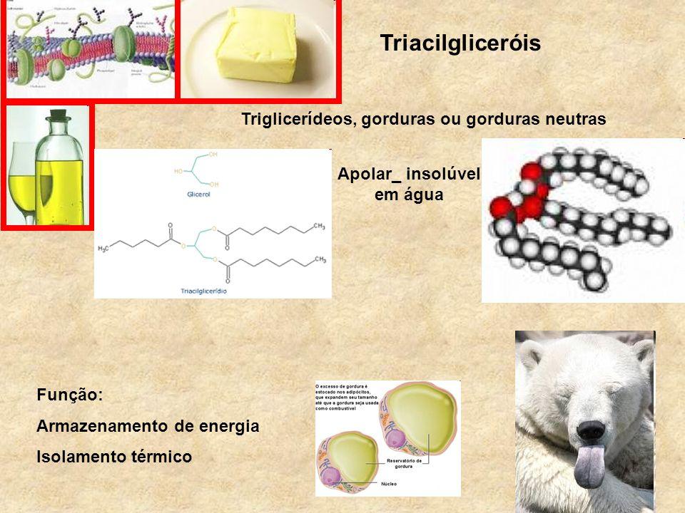 Triacilgliceróis Triglicerídeos, gorduras ou gorduras neutras Apolar_ insolúvel em água Função: Armazenamento de energia Isolamento térmico