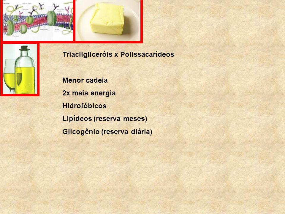 Triacilgliceróis x Polissacarídeos Menor cadeia 2x mais energia Hidrofóbicos Lipídeos (reserva meses) Glicogênio (reserva diária)