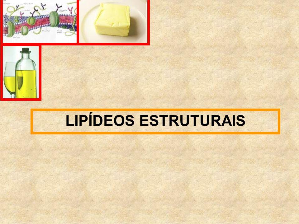 LIPÍDEOS ESTRUTURAIS