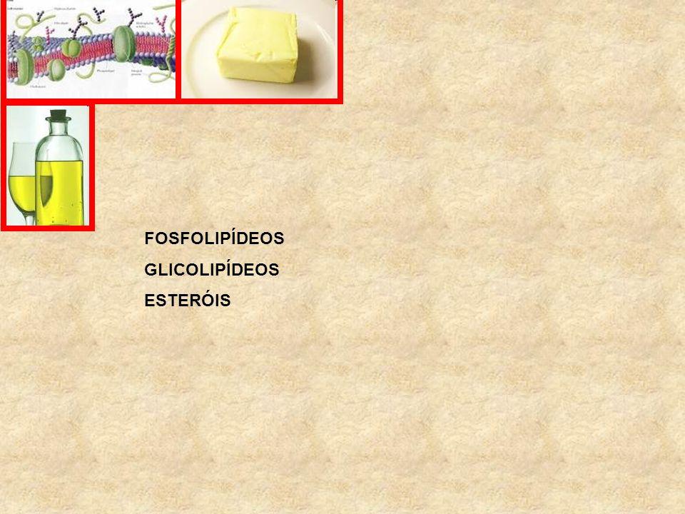 FOSFOLIPÍDEOS GLICOLIPÍDEOS ESTERÓIS