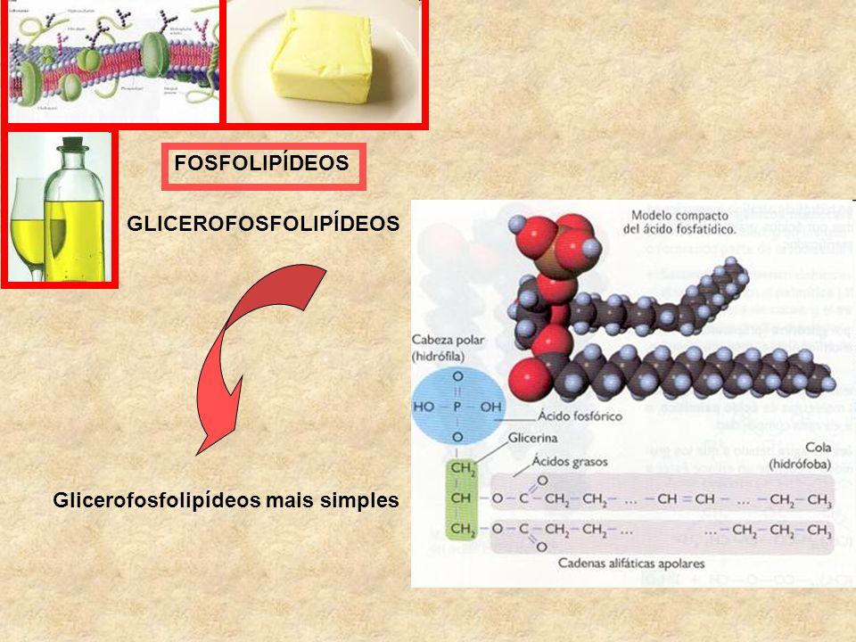 FOSFOLIPÍDEOS GLICEROFOSFOLIPÍDEOS Glicerofosfolipídeos mais simples
