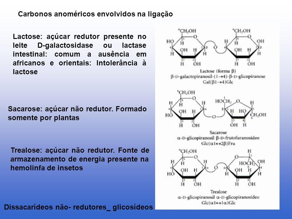 Dissacarídeos não- redutores_ glicosídeos Lactose: açúcar redutor presente no leite D-galactosidase ou lactase intestinal: comum a ausência em african