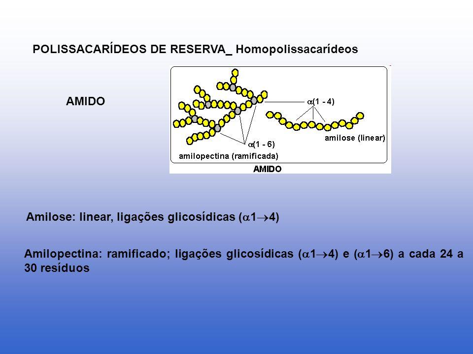 POLISSACARÍDEOS DE RESERVA_ Homopolissacarídeos AMIDO Amilose: linear, ligações glicosídicas ( 1 4) Amilopectina: ramificado; ligações glicosídicas (