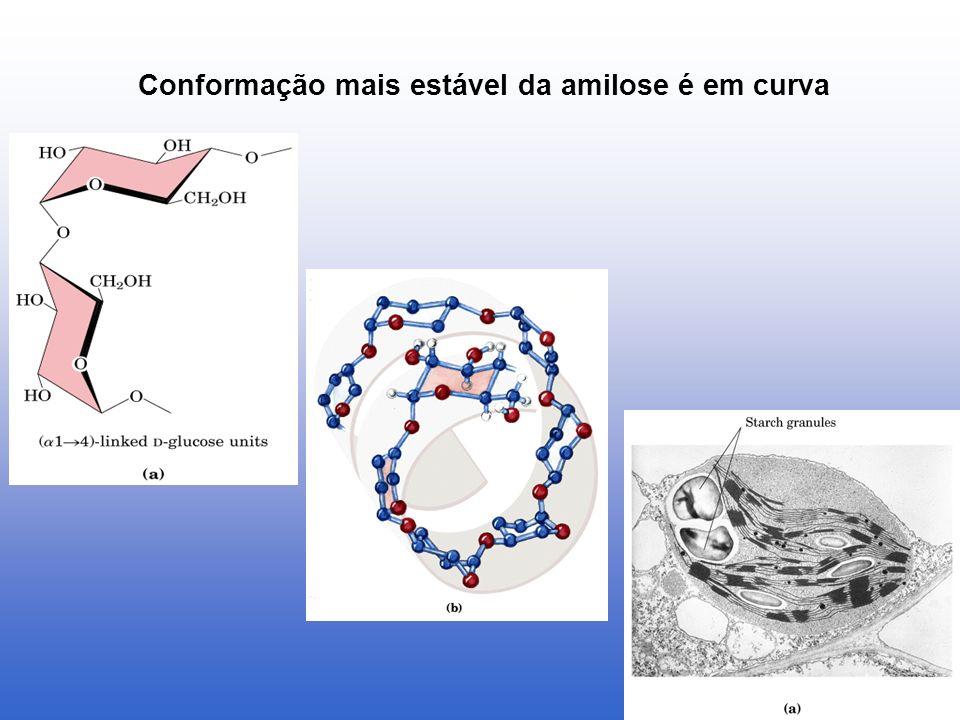 Conformação mais estável da amilose é em curva