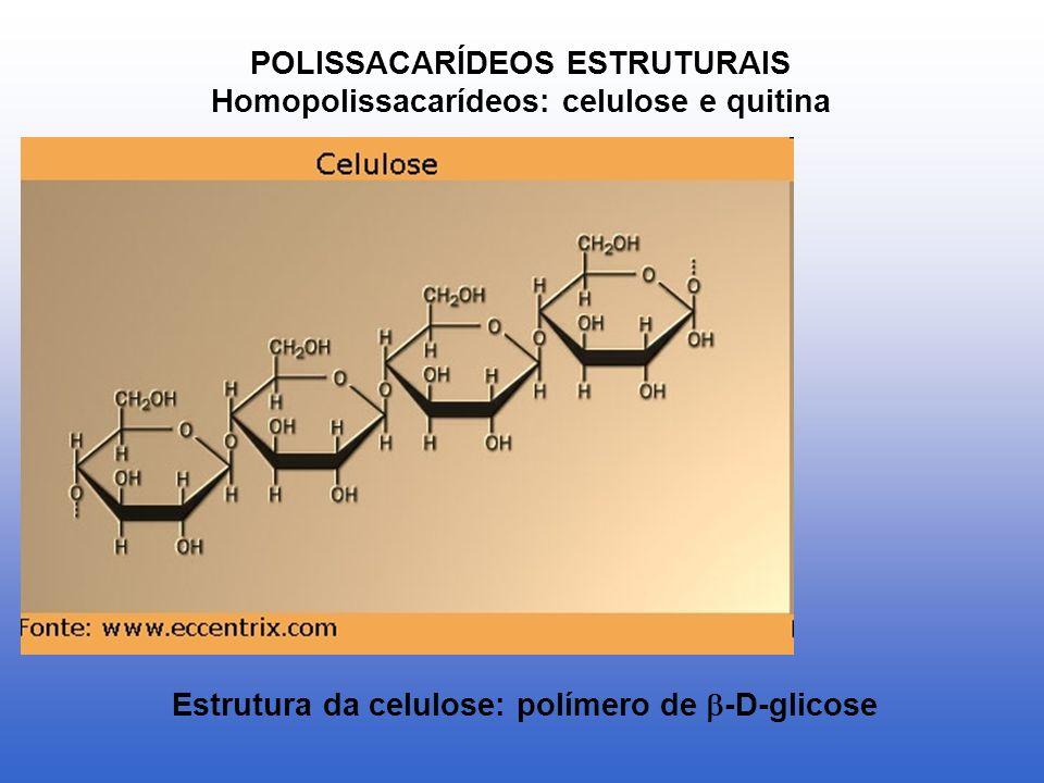 POLISSACARÍDEOS ESTRUTURAIS Homopolissacarídeos: celulose e quitina Estrutura da celulose: polímero de -D-glicose