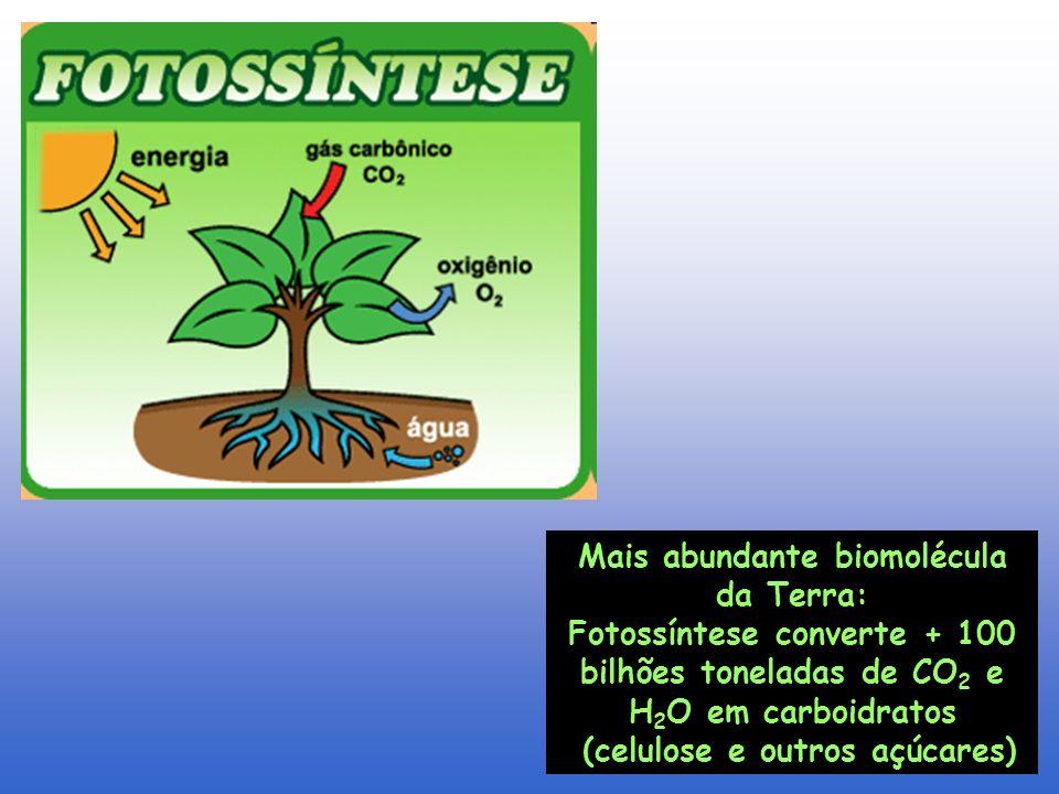 Mais abundante biomolécula da Terra: Fotossíntese converte + 100 bilhões toneladas de CO 2 e H 2 O em carboidratos (celulose e outros açúcares)